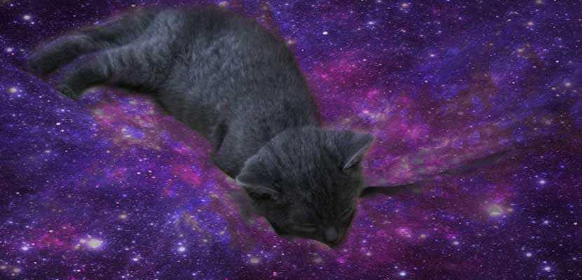 gatitos-y-galaxias